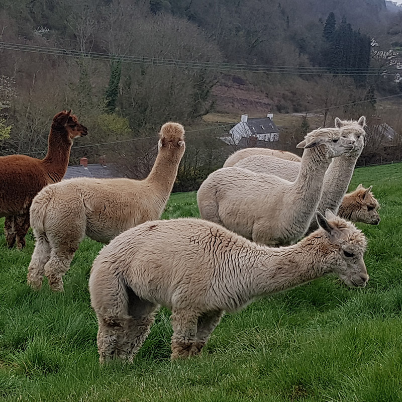 Pacas and Proscecco