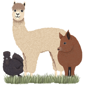 Wye Valley Alpacas