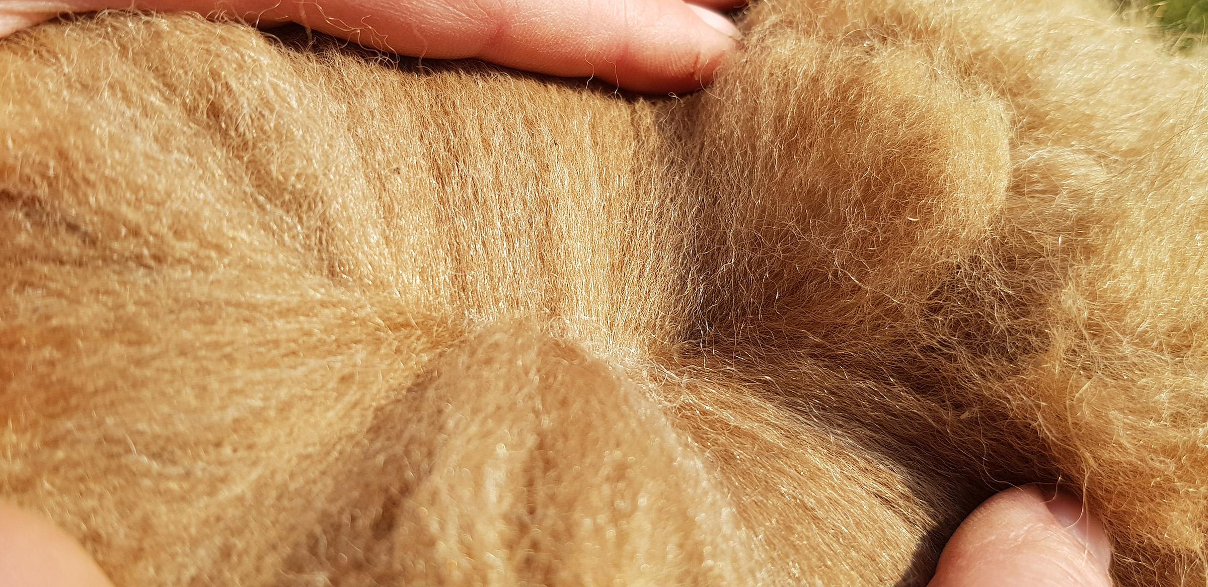 Alpaca Fleece Close-Up